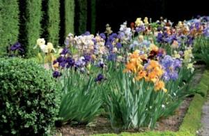 Des vivaces pour un jardin coloré