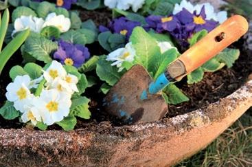 Picardie d co des vivaces pour un jardin color for Fleurs jaunes jardin vivace