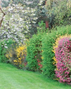 Slow gardening, jardiner moins, mais mieux !